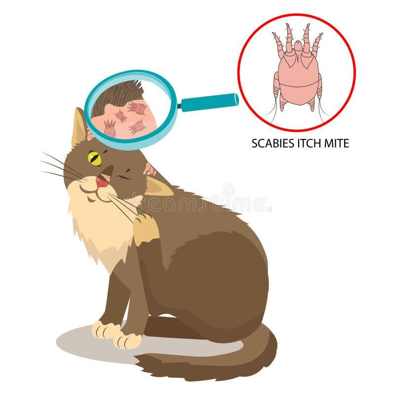 Parasiet van de Huid Cat Parasites Vector jeukmijt Sarcoptes Scabiei royalty-vrije illustratie