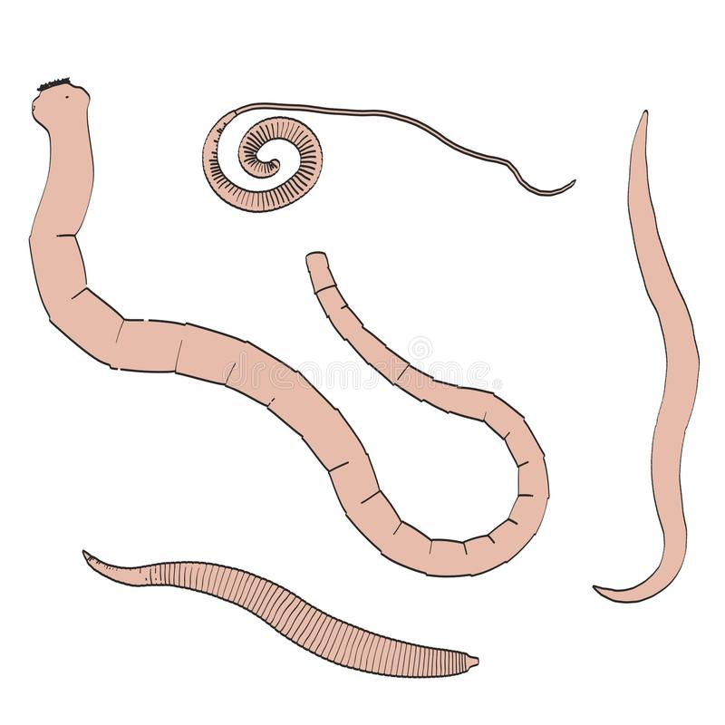 Parasita digestivos ilustração royalty free