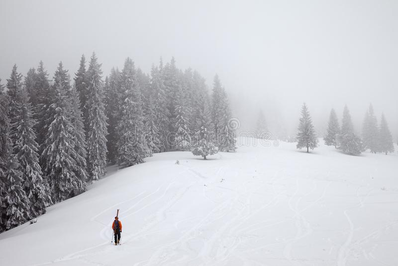 Parasitario vaya para arriba en cuesta fuera de pista de la nieve en ingenio congelado del bosque del abeto imagenes de archivo