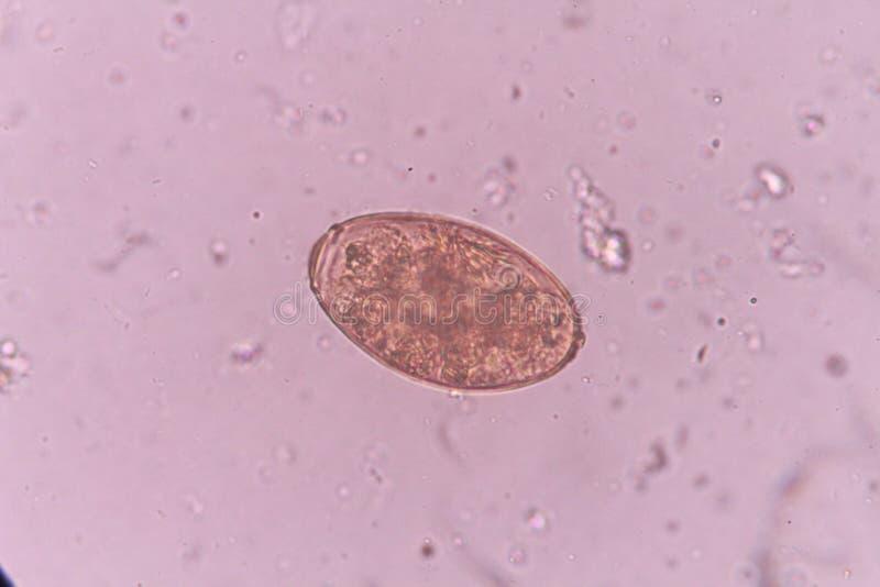 Parasite stock photos