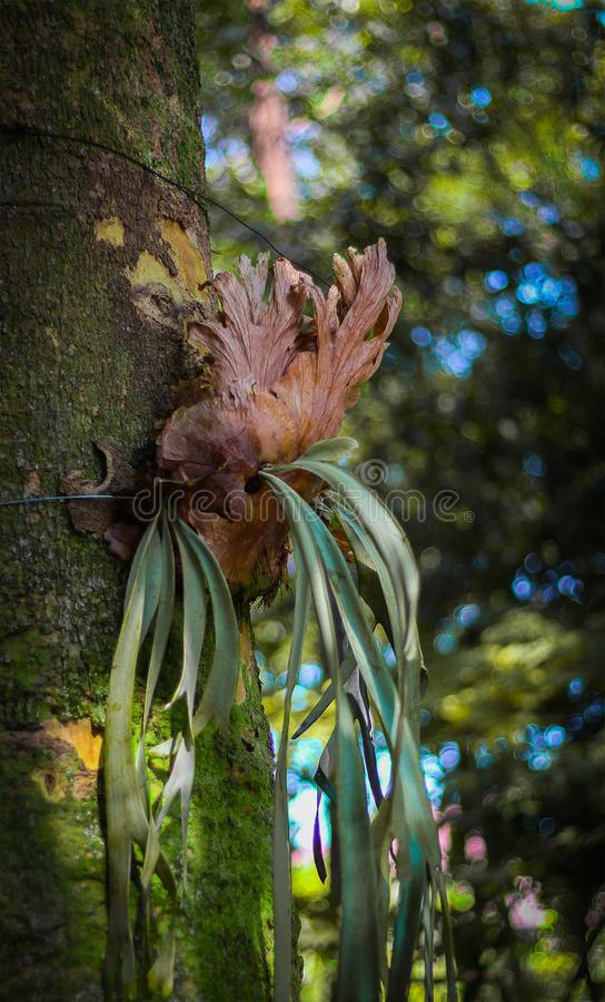 A parasite plant hanging on the tree at the forest stock photography