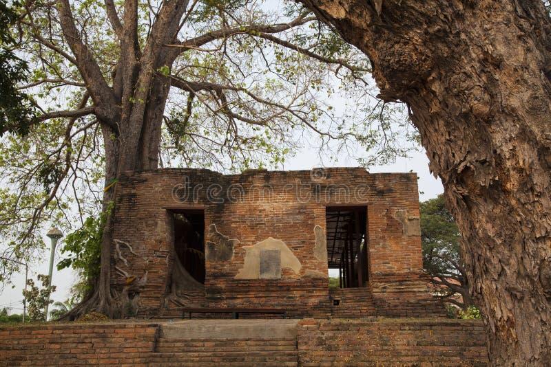 Wat Khun Inthapramun Ang Thong Province Thailand. Parasite tree at Wat Khun Inthapramun public temple in Thailand stock images