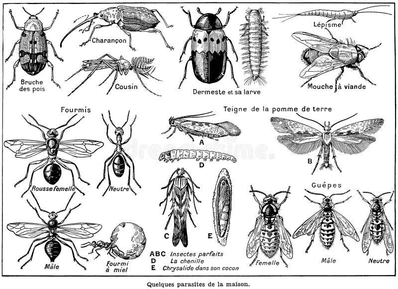 Parasites Free Public Domain Cc0 Image