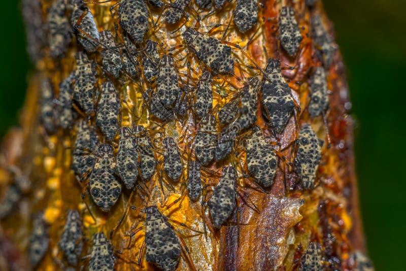 Parasitmakrofoto fotografering för bildbyråer