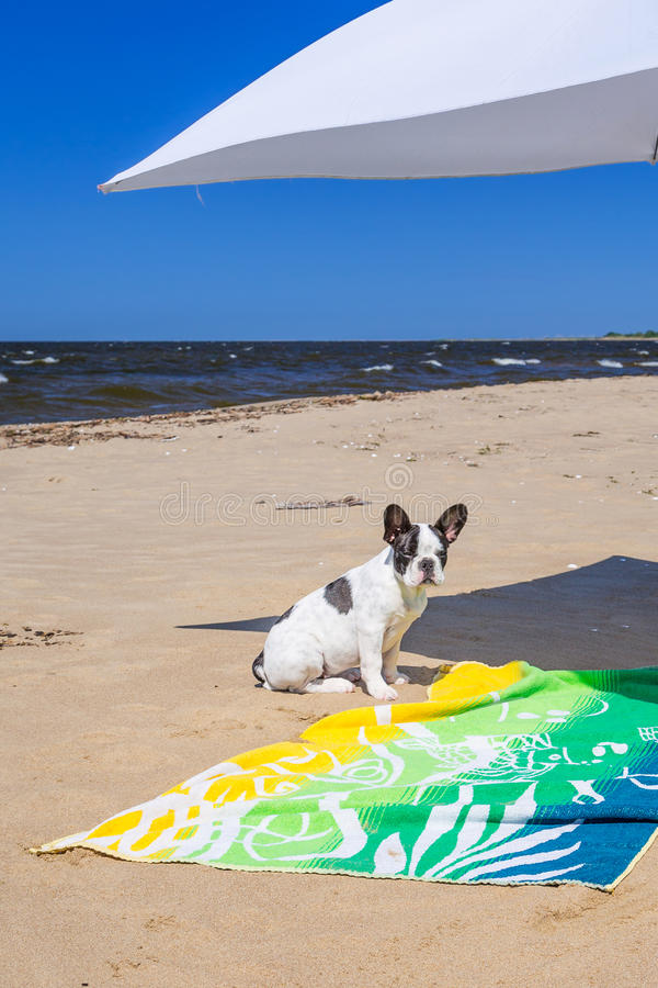 Download Parasol And Dog On The Beach Of Baltic Sea Stock Image - Image: 33210187
