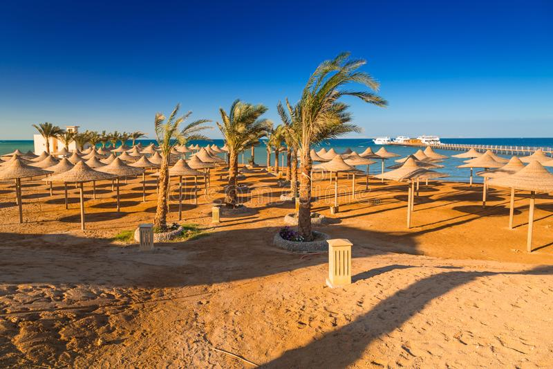 Parasols on the beach of Red Sea stock image