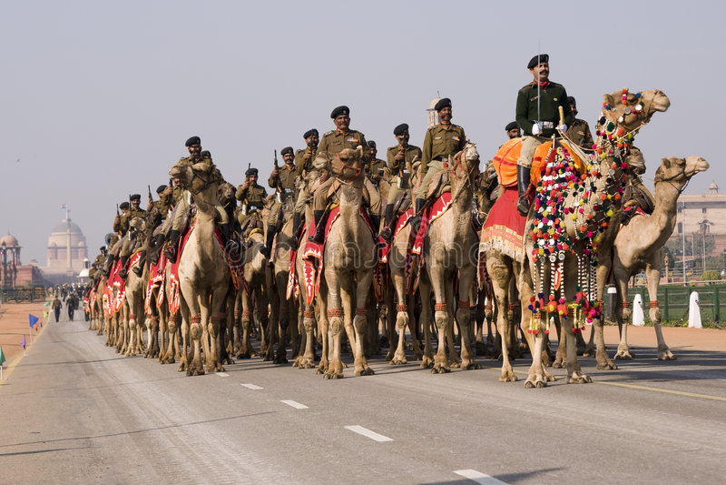Parata del cammello fotografie stock