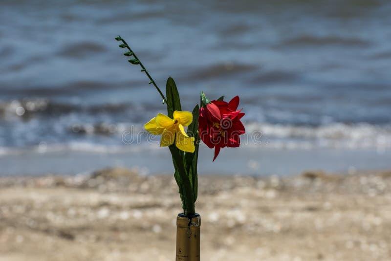 两黄色和在瓶的红色花在海附近 免版税库存照片