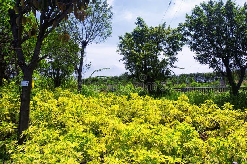 Parc écologique Shenzhen Chine de palétuvier de Futian image stock