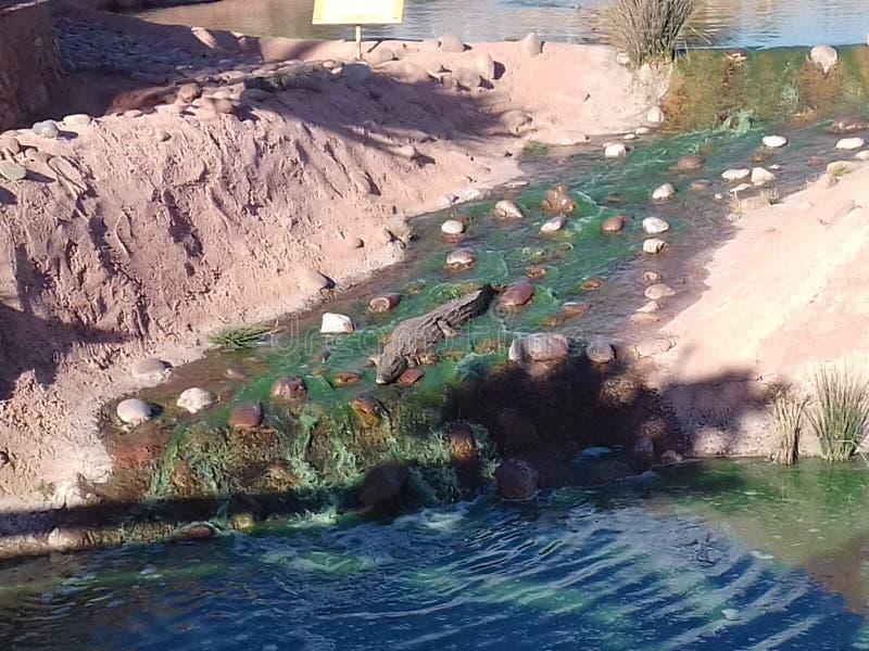 Parc Agadir de Croco image stock