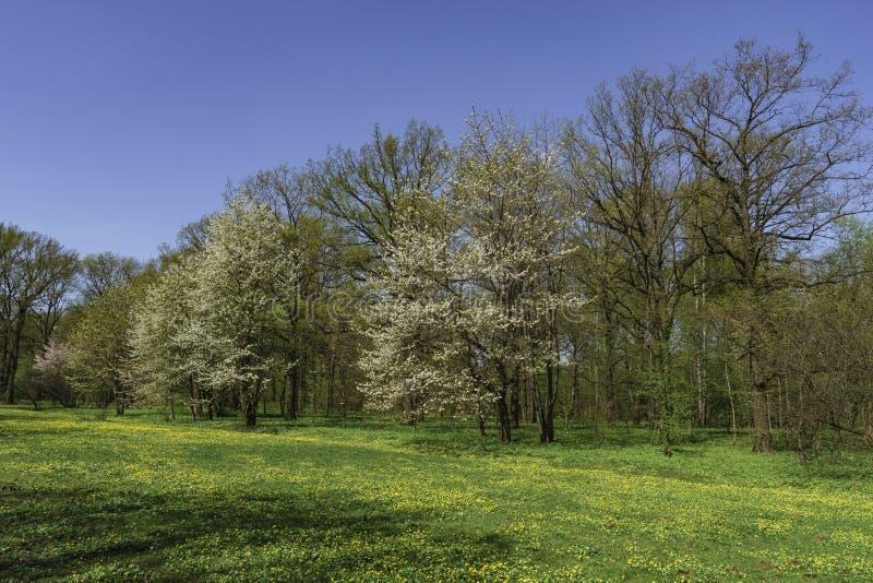Parc au printemps, photo stock