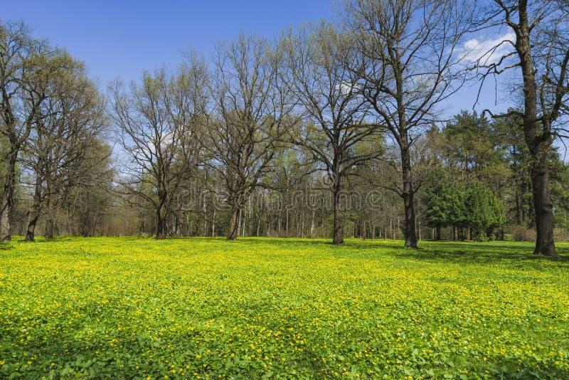 Parc au printemps image stock