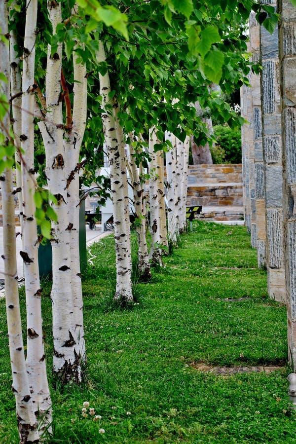 Parc avec les arbres et les colonnes blancs de diff?rentes pierres image libre de droits