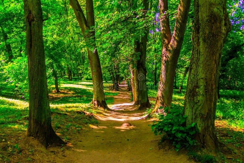 parc avec un lac et de vieux arbres photos libres de droits
