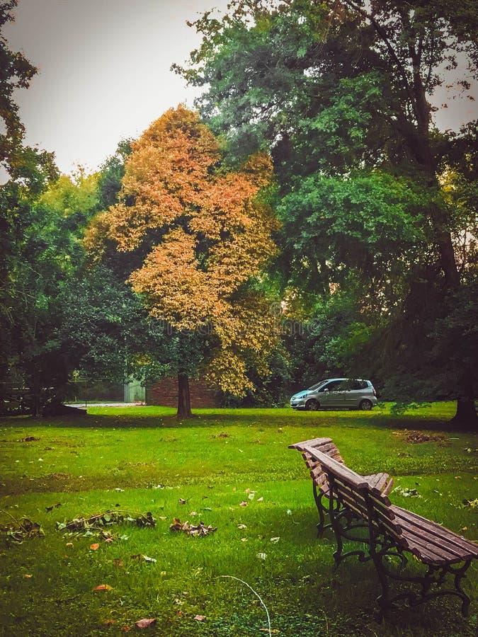 Parc, banc et dans la distance un arbre isolé images stock