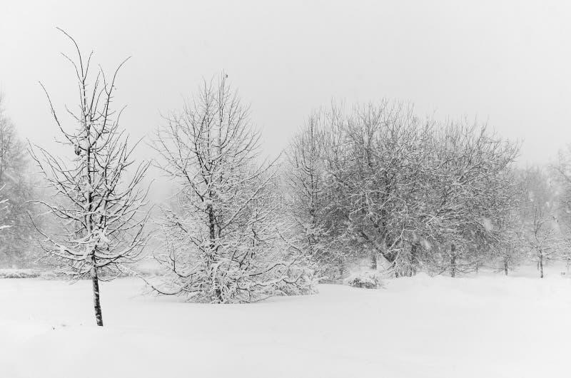 Parc blanc d'hiver Horizontal monochrome de l'hiver Arbres dans la neige photos libres de droits
