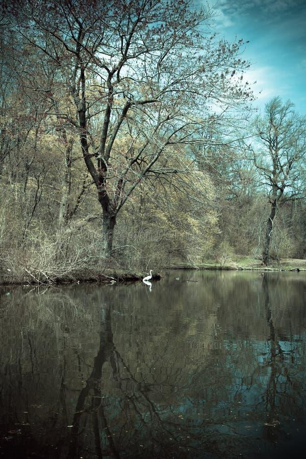 Parc Brooklyn de perspective photographie stock libre de droits