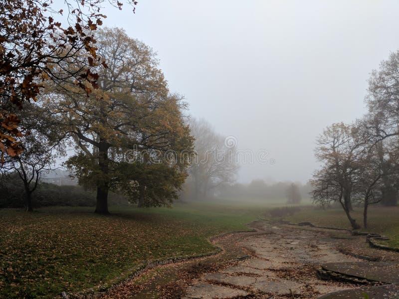 Parc brumeux en automne avec les chênes et l'herbe, ciel gris froid photographie stock