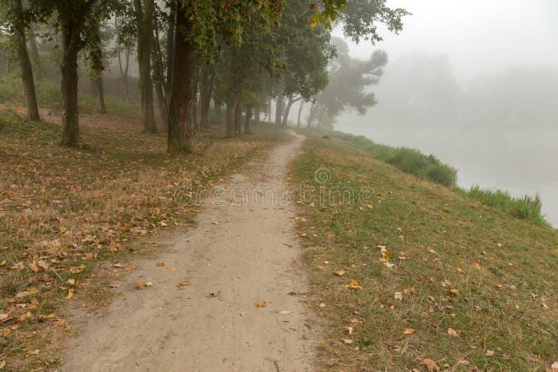 Download Parc brumeux près de lac image stock. Image du horizontaux - 77150153