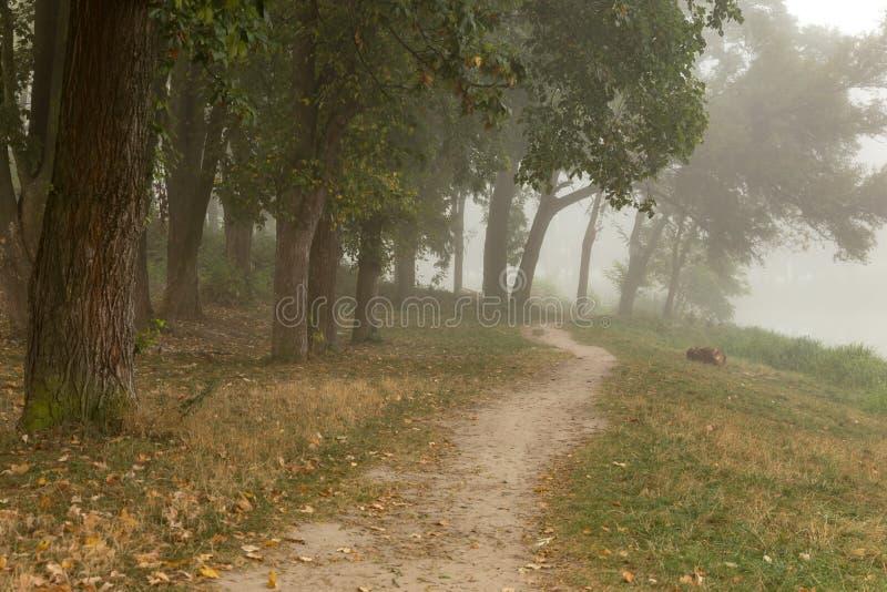 Download Parc brumeux près de lac image stock. Image du vert, saison - 77152117