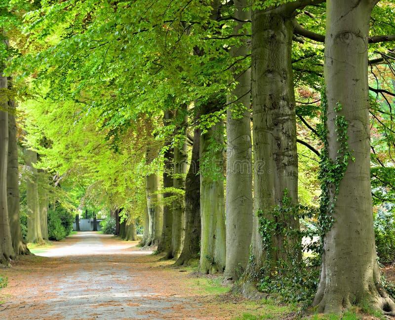Parc com árvores grandes e caminho sombreado fotografia de stock