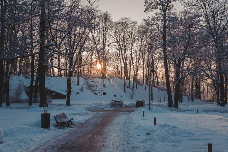 Parc congelé en hiver sous la neige Les rayons du soleil traversent les branches de l'des arbres photographie stock