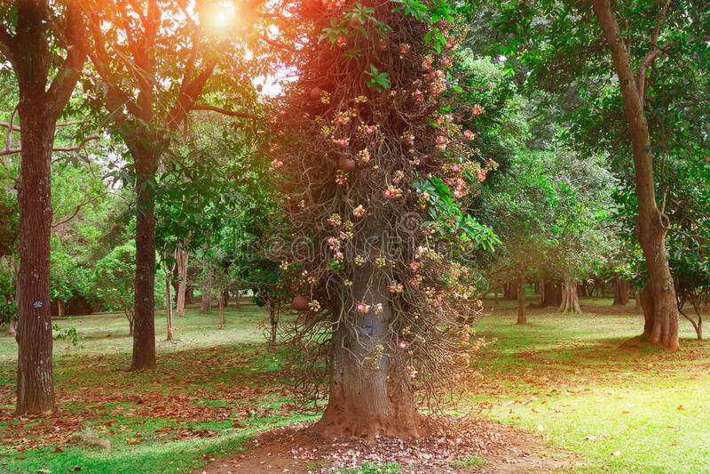 Parc d'été avec de vieux arbres et chemins de marche dans le soleil de matin photographie stock