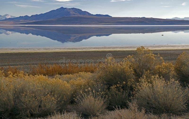 Parc d'état d'île d'antilope en hiver photographie stock