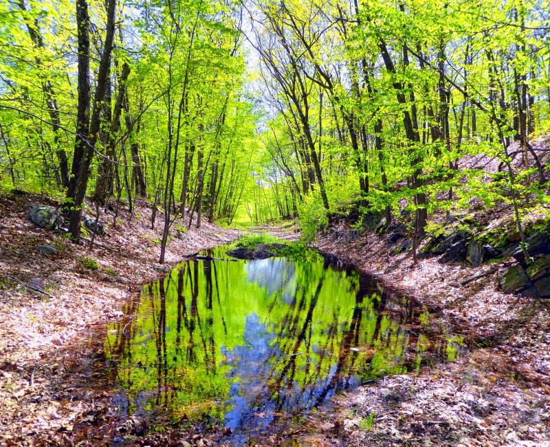 Parc d'état de barrage de ruisseau d'houblon dans Naugatuck image libre de droits