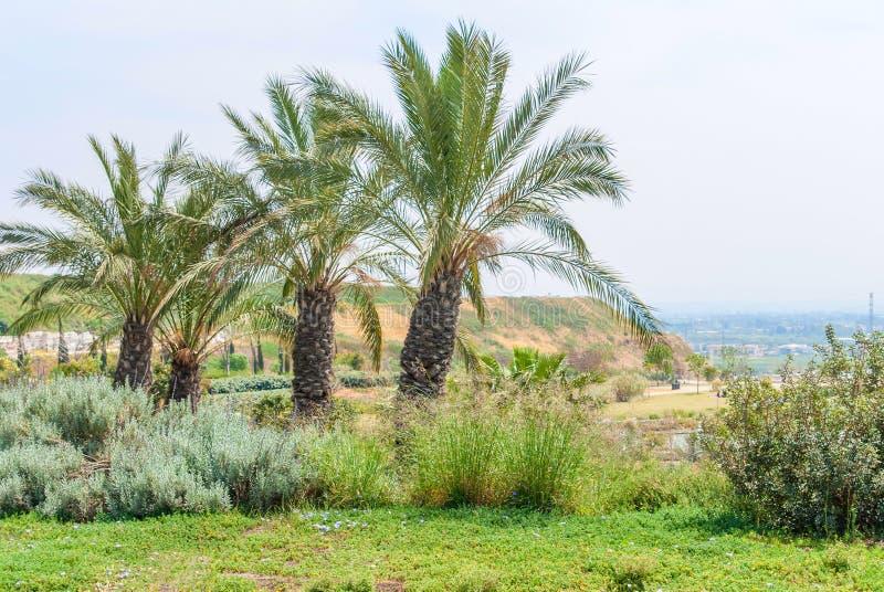 Parc d'Ariel Sharon, Israël image stock