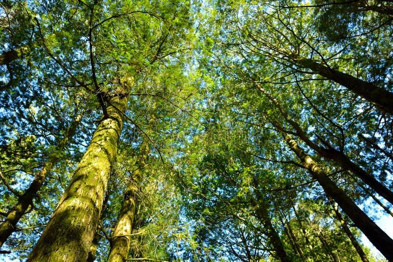 Parc d'attractions de forêt d'Alishan images stock