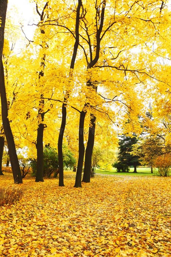 Parc d'automne images stock