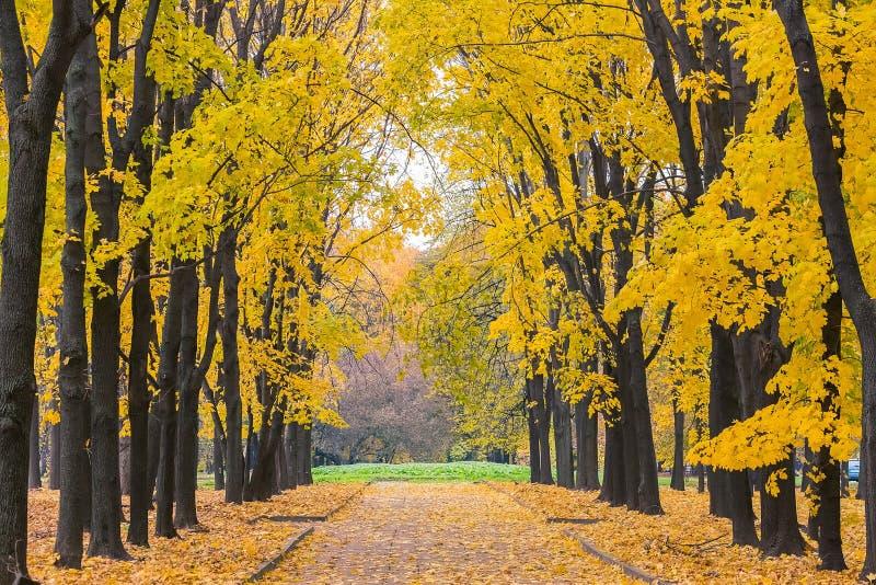 Download Parc d'automne photo stock. Image du feuillage, rural - 45359672
