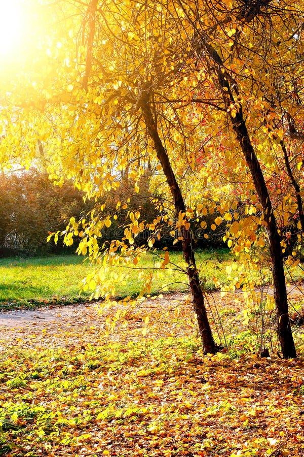 Download Parc d'automne photo stock. Image du extérieur, multicolore - 56484376