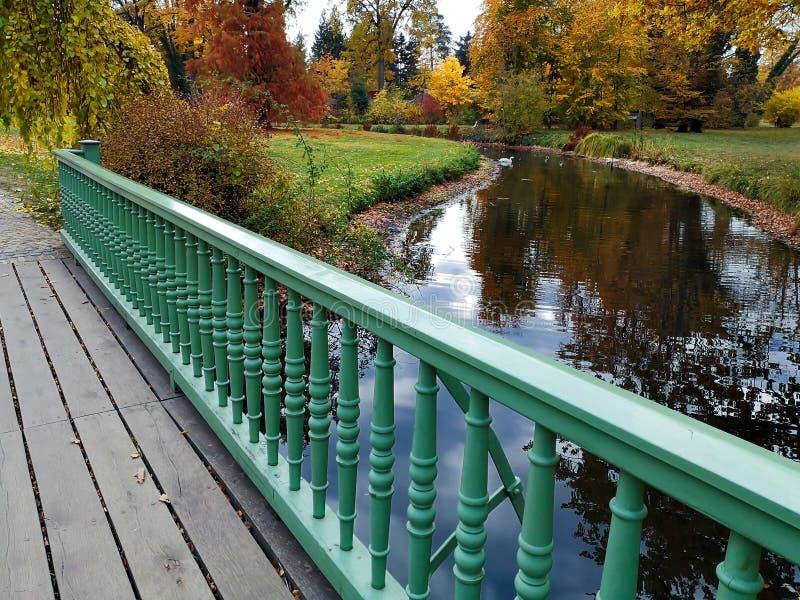 Parc d'automne avec la natation blanche de cygne par l'étang, vue par derrière la balustrade de pont photos stock