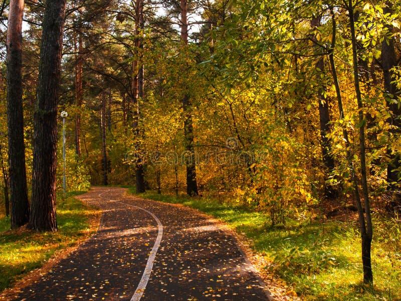 Parc d'automne, beau paysage d'automne de forêt Allée en parc photographie stock libre de droits