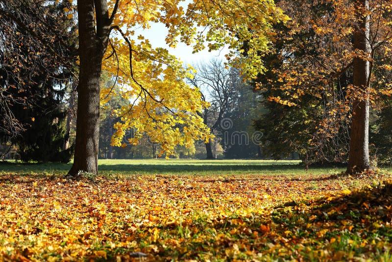 Parc d'automne de ville photographie stock libre de droits