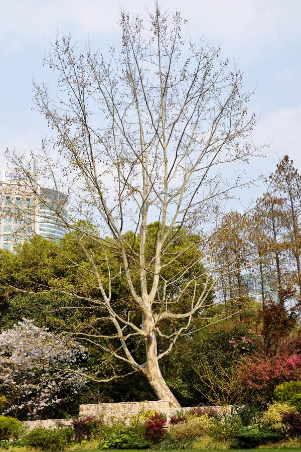 Parc d'automne pendant le matin par temps nuageux Parc d'automne d'image Paysages de septembre en parc Temps obscurci Allées de p image stock