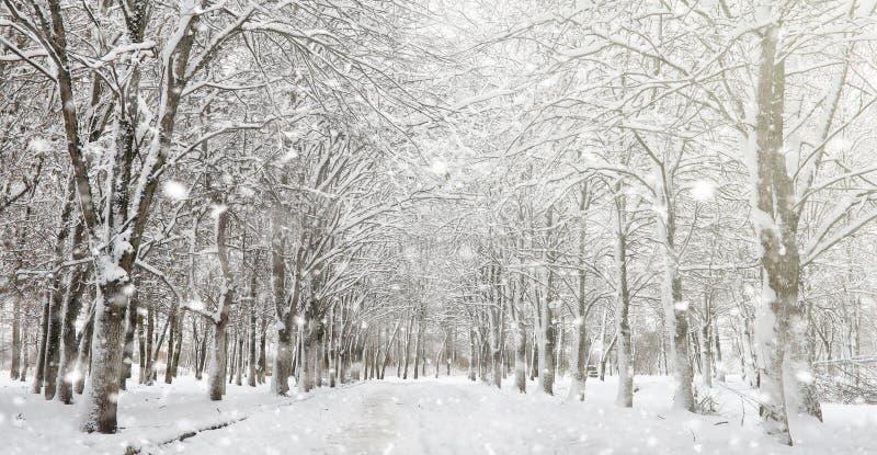 Parc d'hiver sous la neige Une tempête de neige en parc de ville Parc f photos libres de droits