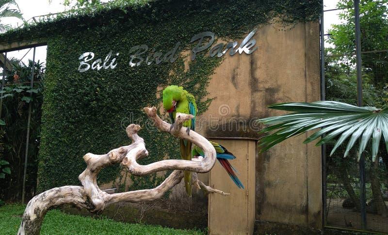 Parc d'oiseau de Bali photo libre de droits