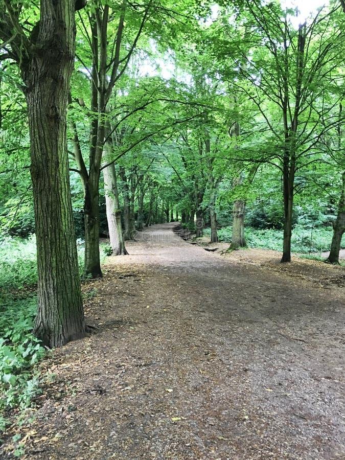 Parc de bruyère de Hampstead image libre de droits