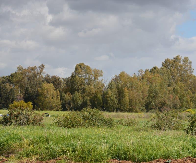 Parc de Hasharon d'auge photos libres de droits