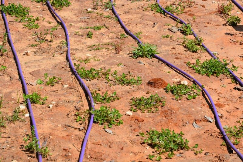 Parc de Hasharon d'auge photo libre de droits