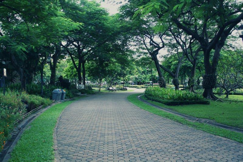 Parc de jour avec les arbres et les usines et les pelouses verts image stock