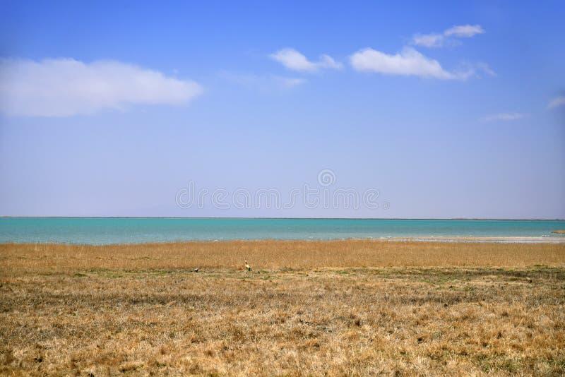 Parc de marécage avec le ciel bleu images libres de droits