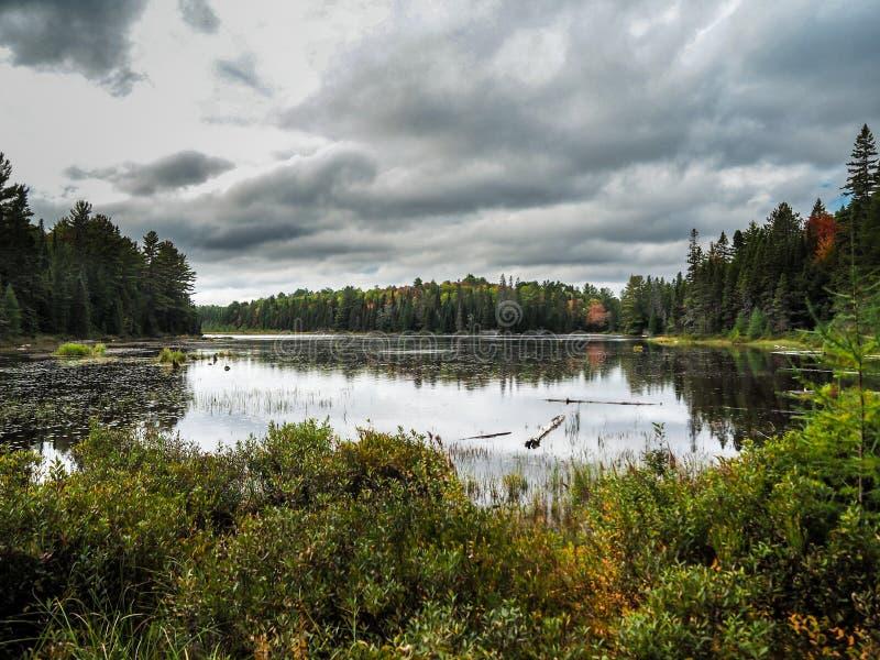 Parc de Marsh Beaver Pond Algonquin Provincial photo stock