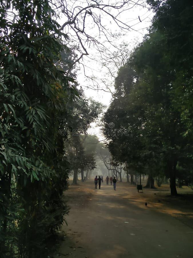 Parc de matin images stock