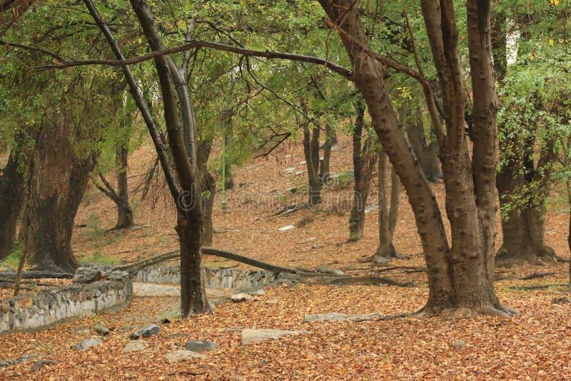 Parc de Monterrey photographie stock