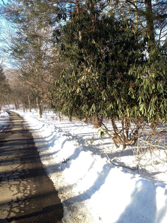 Parc de Pemberwick photo libre de droits