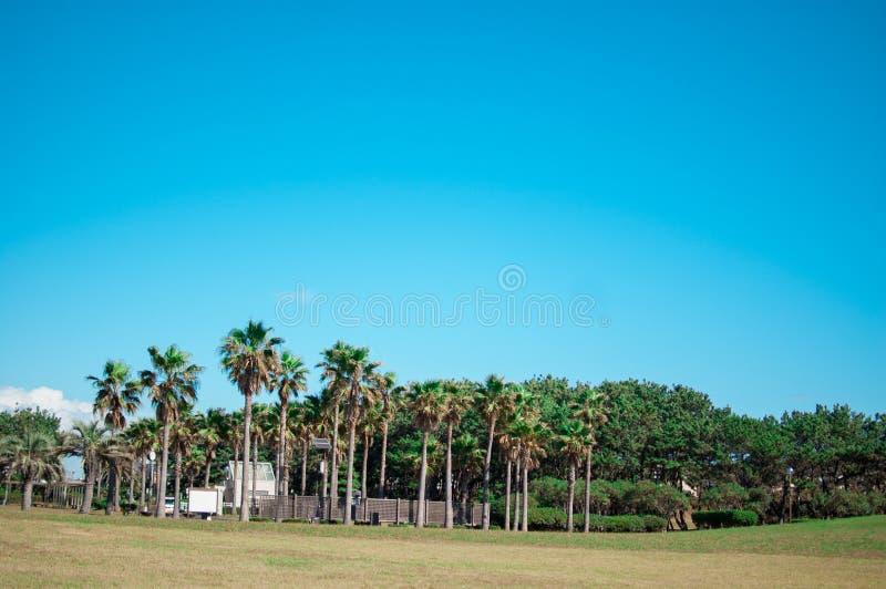 Parc de plage autour de Shonan au Japon Shonan est un secteur situé dans au sud de Tokyo Dans l'heure d'été, internationale en ét image libre de droits